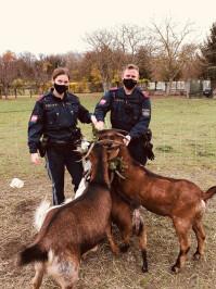 Bezirk Bruck Ziege namens 'Lady' aus misslicher Lage befreit