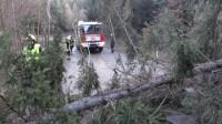 Sturmschäden: Umgestürzter Baum blockiert Straße