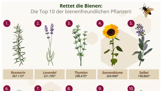 Die Top 10 der bienenfreundlichen Pflanzen!