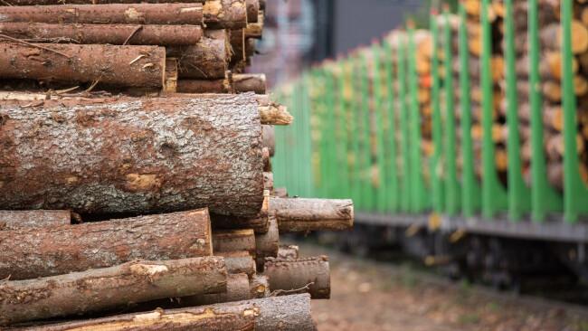 Holz Baumstämme Baum Holzverladestelle verladen Symbolbild