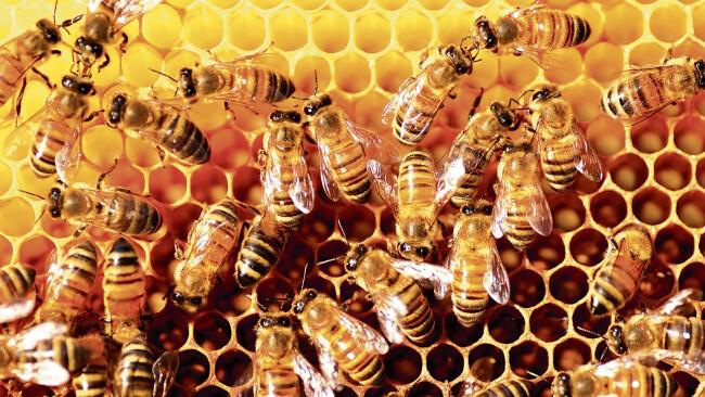 Bienen Symbolbild