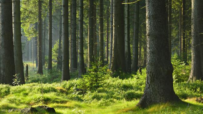 Symbolbild Wald Waldlandschaft Bäume