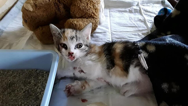 Katzen aus fahrendem Auto geworfen