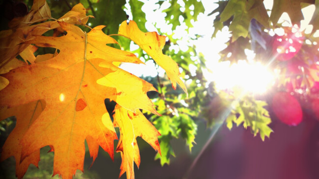 Herbst Symbolbild