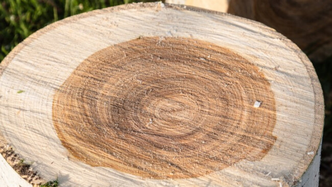 Baumstamm Symbolbild