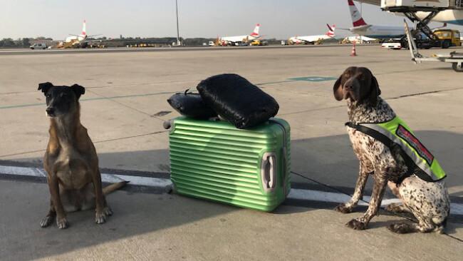 Polizei und Zoll stellen fünf Kilogramm Cannabis am Flughafen sicher