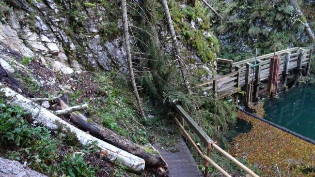 Tödlicher Wanderunfall nach Baumsturz im Mendlingtal