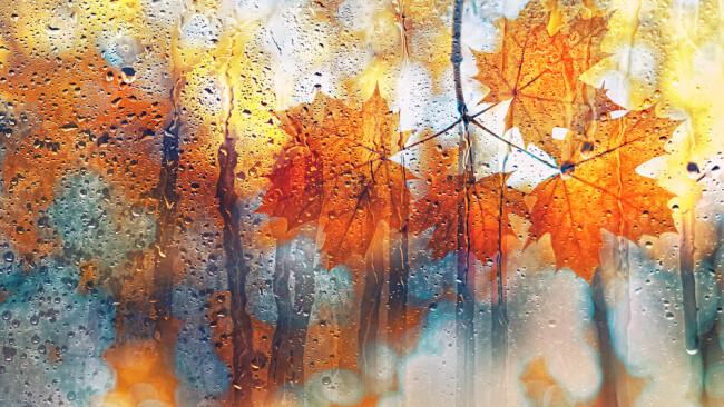 Herbst Regen Nass Wetter Symbolbild Regenschirm