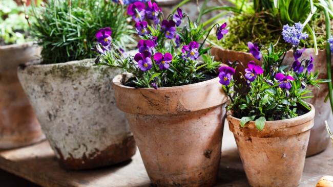 Blumen Garten Symbolbild