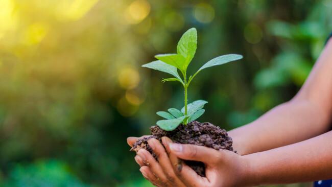 Symbolbild Natur Umwelt CO2 Nachhaltigkeit Pflanze Agrar