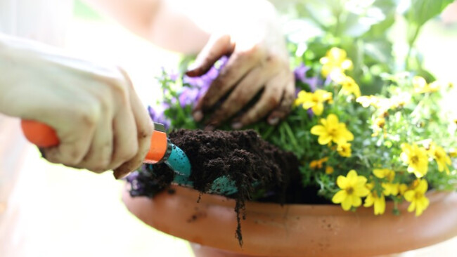 Blumen Gärtnern Gartenarbeit Symolbild