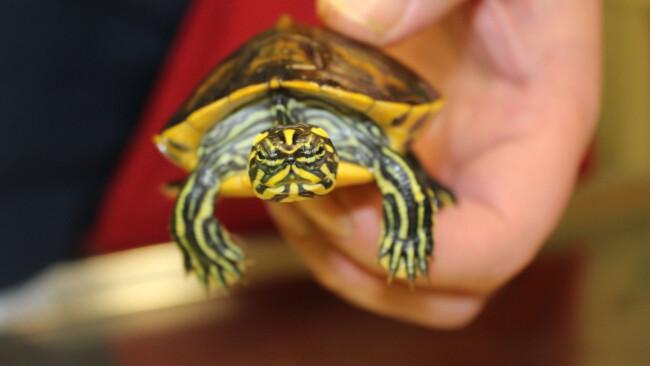 Wasserschildkröten_1.jpg