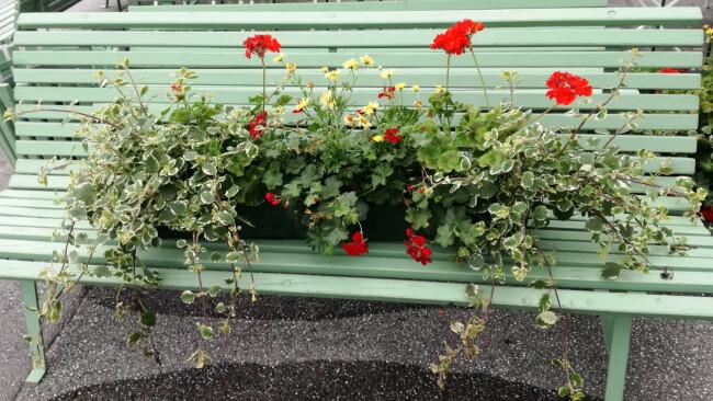 Baden: Blumendiebe auf der Trabrennbahn