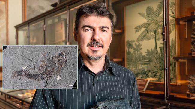 Lunz Forschung Vor 233 Millionen Jahren