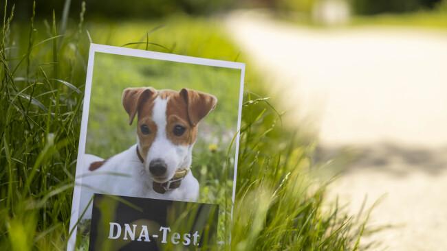 20210611 PK Gemeinderat Resolution Hunde DNA (3) foto_c.kollerics