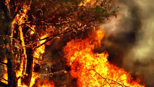 Waldbrand Symbolbild