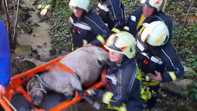 Pony aus Bachbett gerettet