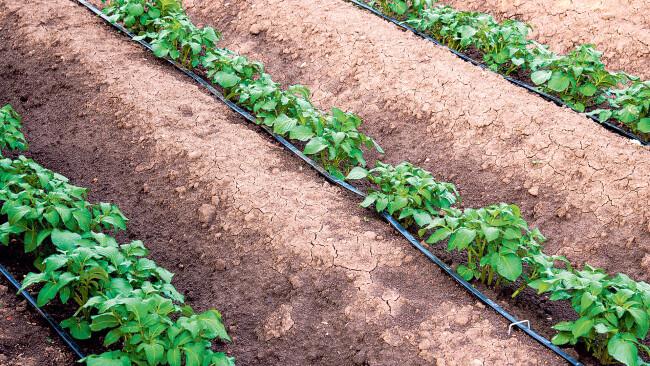 Bis 2023 sind 15 neue Agrar- Bewässerungsprojekte zur Ertragssicherung in NÖ geplant.