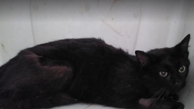 Hoffnung für gequälte Katze St. Veit Kleinzell Tierschutzverein St. Pöltem