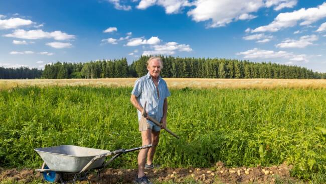 Benefiz-Aktion - Brunn: Ernten für das St. Anna Kinderspital