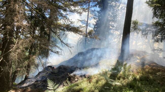 Der Wald als Klimaschützer und Opfer der Klimakrise