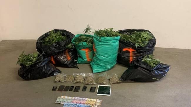 Cannabisindooranlage im Bezirk Hollabrunn sichergestellt – 2 Beschuldigte festgenommen