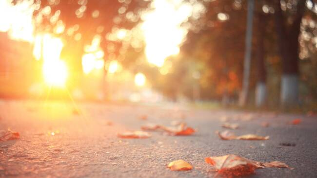 Straße Straßenrand Herbst Blurred Background Symbolbild