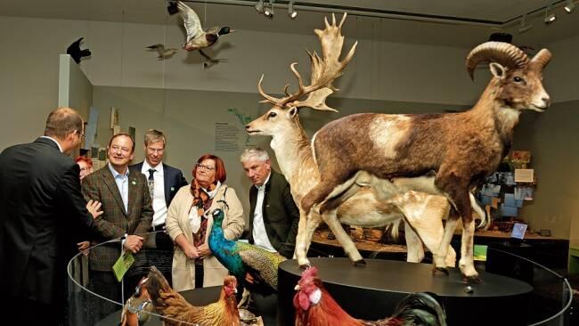 Ausstellung - Haus für Natur: St. Pöltens unbeachtete Stadtbewohner